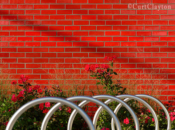 Roses against a red brick wall at the Chass Center on Fort Street in Detroit.