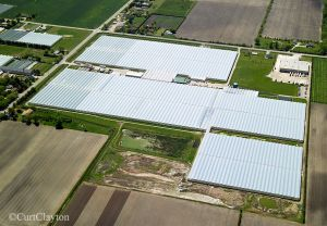 Leamington greenhouses